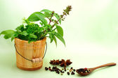 Collection of herbs with peppercorns — Stock Photo