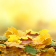 Autumn leaves — Stock Photo #8478023