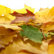 Autumn leaves — Stock Photo #8478125