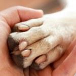 人間間の友情と犬 — ストック写真