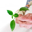 Stock Photo: Senior womholding green plant