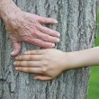 图库照片: Old and Young Hands on Tree Trunk