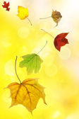 Autumn leaves on soft yellow background — Stock Photo