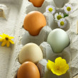 Stock Photo: Organic colorful eggs