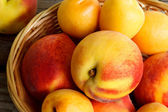 Juicy nectarines and apricots in basket — Stock Photo