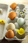 Organic colorful eggs — Stock Photo