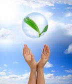 Hands holding young plant in a bubble — Stock Photo