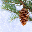 Pine cone with snow — Stock Photo