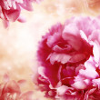 Pink Peony Flowers — Stock Photo