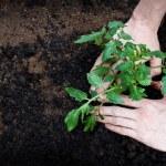 Planting — Stock Photo #9557859