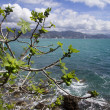 Fig tree over the sea — Stock Photo