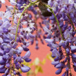 Stock Photo: Colorful wisteribranch