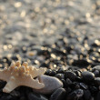 Stock Photo: Seastar on rocks
