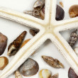 Sea shells composition — Stockfoto