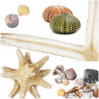 Sea shells collage — Stockfoto