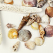 Sea shells composition — ストック写真