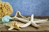 летние ракушки на песке — Стоковое фото