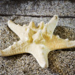 Starfish on sand — Stockfoto