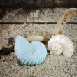 Spiral sea shells on sand — Stockfoto
