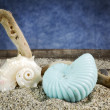 Spiral sea shells on sand with blue background — Stockfoto