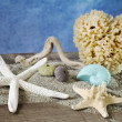 Summer concept with seashells selection — Foto de Stock