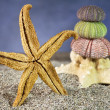 Starfish on sand with sea urchins — Foto de Stock