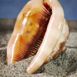 Seashell inner part on sand — Stockfoto