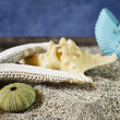 Seashells selection on sand — Stockfoto