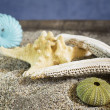 Seashells composition on sand — Stockfoto