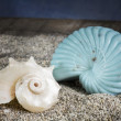 Spiral seashells on sand over wooden background — ストック写真