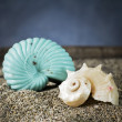Stockfoto: Spiral seashells on sand