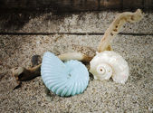Spiral sea shells on sand — Stock Photo