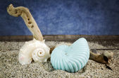 Spiral sea shells on sand with blue background — Stock fotografie