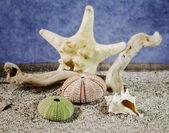 Summer seashells composition — Stock Photo