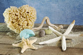 Summer concept with seashells selection — Stock Photo
