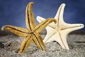 зад морская звезда на песке — Стоковое фото
