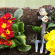 Gardening tools and primroses — Stockfoto