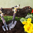 Gardening tools and primroses — Photo