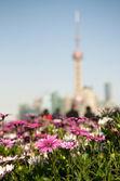 Verde de shangai — Foto de Stock