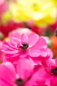 Blooming Pink flower in spring — Stock Photo