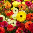 Blooming Colorful Flowers — Stock Photo