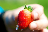 Washing Strawberry — Stock Photo