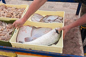 Crates of freshly caught fish — Stock Photo