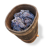 Tub with grapes - clipping path — Stock Photo