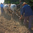 Plowing with bullocks — Stock Photo #8375583