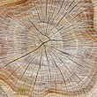 Stump of tree — Stock Photo