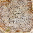 Stump of tree — Stock Photo #8712967