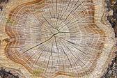 Stump of tree — Stock Photo