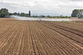 Field irrigation — Stock Photo