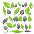 Royalty-Free Stock 矢量图片: Leaves design set